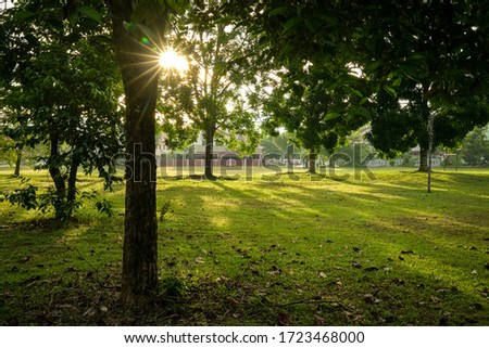 Beautiful green park with trees. Sun rays and flares. Nature background. Stock fotó ©