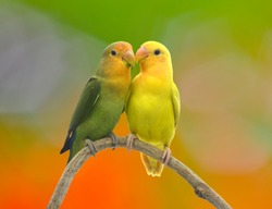 beautiful green parrot lovebird on colorful nature  background