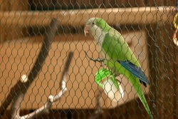 Beautiful green parrot sitting in zoo cage. Small colorful wild bird behind the fence. Cute domesticated animal.