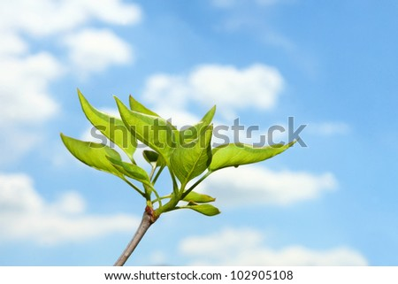 beautiful green plant on the background of blue sky