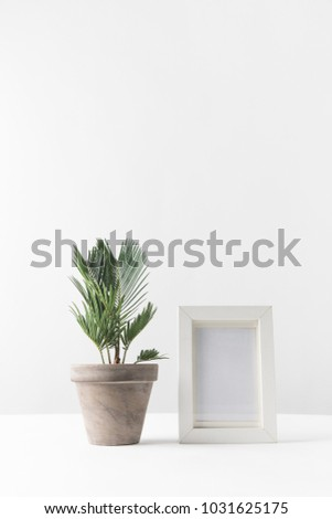 beautiful green potted plant and empty photo frame on white  - Shutterstock ID 1031625175