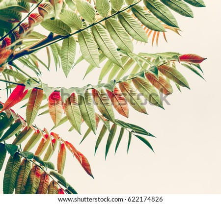 Beautiful green red leaves. Tropical leaves on light background. Autumn fall nature #622174826
