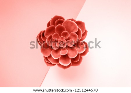 Beautiful green succulent isolated on yellow background. Flat lay, top view. Color of the year 2019 Living coral. #1251244570