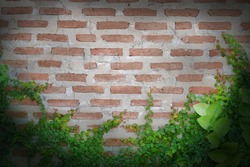 Beautiful green vines aside, brown and gray antique plaster walls.center focus