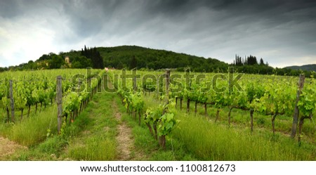 Beautiful green vineyards in Tuscany, with blue sky. Chianti region in Italy.  #1100812673