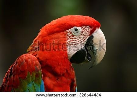Shutterstock beautiful Green-winged Macaw (Ara chloropterus) as pet