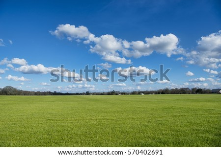 Beautiful Green Winter Grass Under Partly Cloudy Sky in Louisiana #570402691