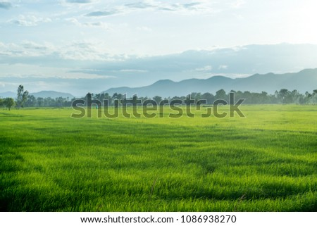 Beautiful green young rice field, mountain  and wide cloudy sky in rainy season.  Natural scene. Farm land scenic North of Thailand. Agriculture land plot for sales.