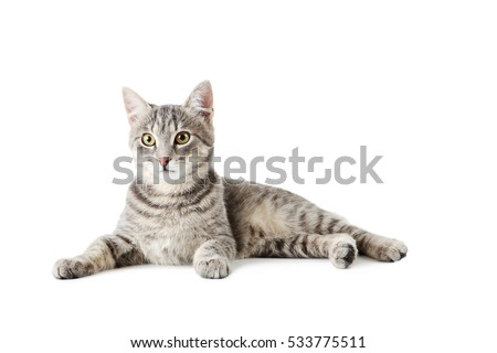 Beautiful grey cat isolated on a white #533775511