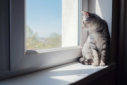 Beautiful grey cat sitting on windowsill and looking to a window. with copy space