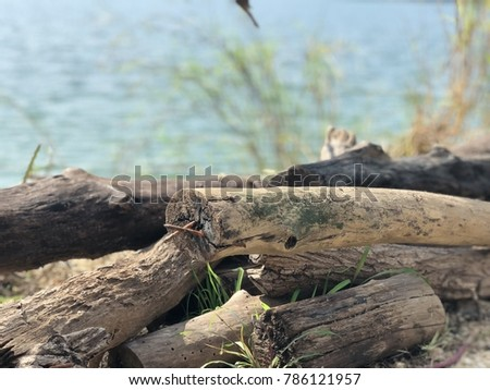 Beautiful group of retro brown wooden texture stump lay down near lake with blurred background #786121957