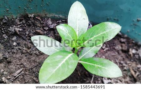 Beautiful growing plant image click in macro