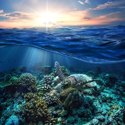 Beautiful Half Water Seascape With Sunset in Sky Postcard. Maldivian Sea Turtle Floating Up And Over Coral reef. Loggerhead in wild nature habitat