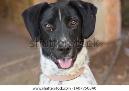 Beautiful happy black and white dog #1407950840
