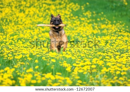 Beautiful happy dog running on a meadow full of flowers