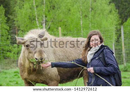 Beautiful Happy young Woman trying to feed a cute wild Moose elk with growing horn in an elk farm during the elk farm visit in northern Sweden in a sunny day with background