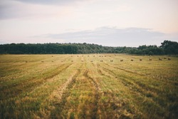 Beautiful haystacks in evening summer field, landscape view.  Harvesting and farming. Hay bales scenery. Atmospheric tranquil moment, Summer in countryside, rural slow life.