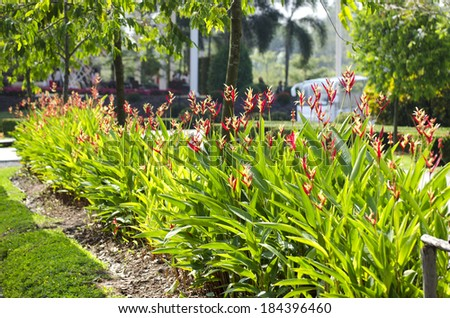 Beautiful heliconia in the garden #184396460