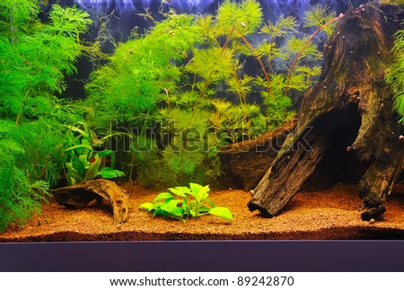 Beautiful Home Aquarium Stock Photo 89242870 : Shutterstock