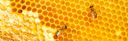 Beautiful honeycomb with bees close-up. A swarm of bees crawls through the combs collecting honey. Beekeeping, wholesome food for health.