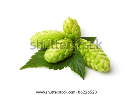 beautiful hop isolated on white