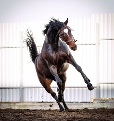 Beautiful horse action portrait in summer