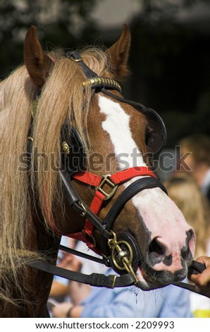 Beautiful Horse Head close-up. Hyde Park, London. Picture is taken at the Horsemen's sunday 2006.