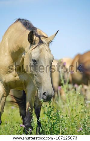 beautiful horse in herd