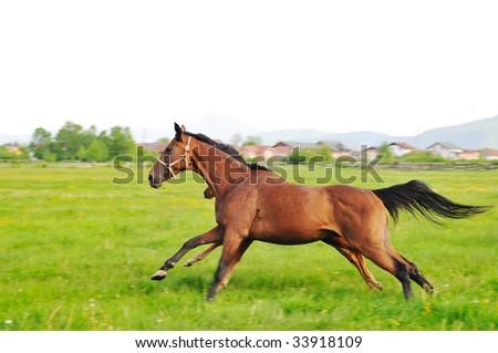 beautiful horse in nature