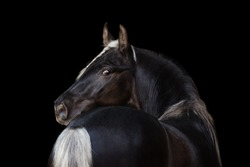 Beautiful horse look back isolated on black background