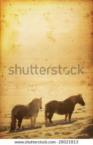 Beautiful horse on old nostalgic background used look Stock photo ©