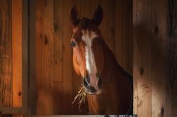 Beautiful horse portrait in warm light