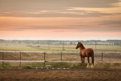 beautiful horse staying on stable at sunset