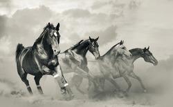 Beautiful horses herd in monochromatic tones