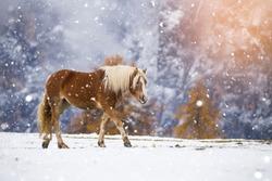 Beautiful horses in Alpe di Siusi, Italy-Dolomites, Alpes.
