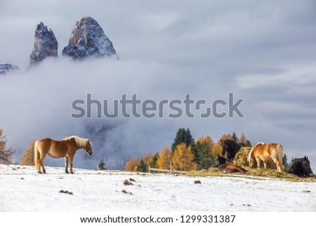Beautiful horses in Alpe di Siusi, Italy-Dolomites, Alpes.  #1299331387