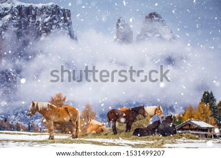 Beautiful horses in Alpe di Siusi, Italy-Dolomites, Alpes.  #1531499207