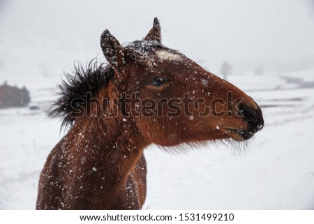 Beautiful horses in Alpe di Siusi, Italy-Dolomites, Alpes.  #1531499210