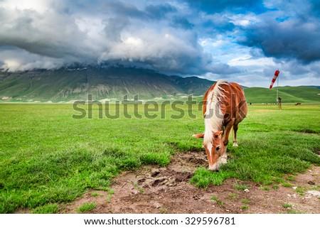 Beautiful horses in valley near Castelluccio, Umbria, Italy #329596781