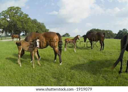 Beautiful Horses 02. See more in my portfolio