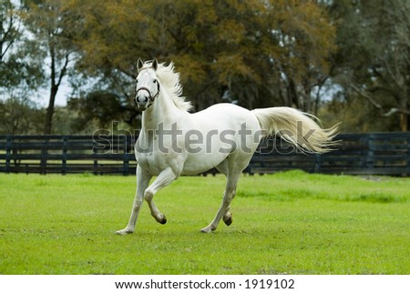 Beautiful Horses 24. See more in my portfolio