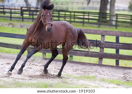 Beautiful Horses 25. See more in my portfolio - stock photo