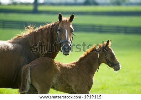 Beautiful Horses 37. See more in my portfolio