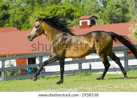 Beautiful Horses 58. See more in my portfolio