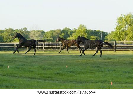 Beautiful Horses 134. See more in my portfolio