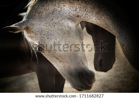 Photo of  Beautiful horses, tenderness, and love pose