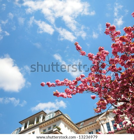 beautiful house with cherry tree on blue sky