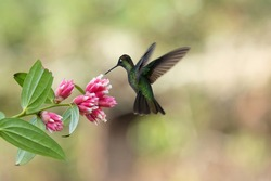 Beautiful hummingbird with pink flower