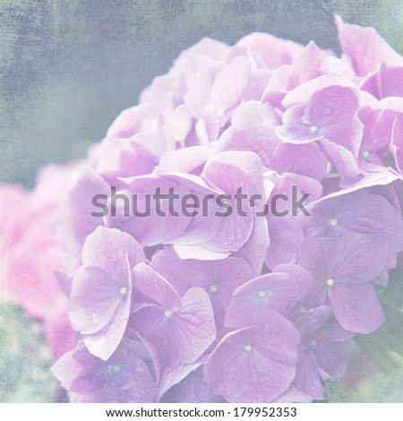 Beautiful hydrangea flower with a soft vintage texture