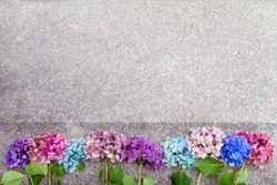 Beautiful hydrangea flowers in multiple colors arranged in a row as a boarder; Bright pink, purple and blue bunches of flowers set in a line